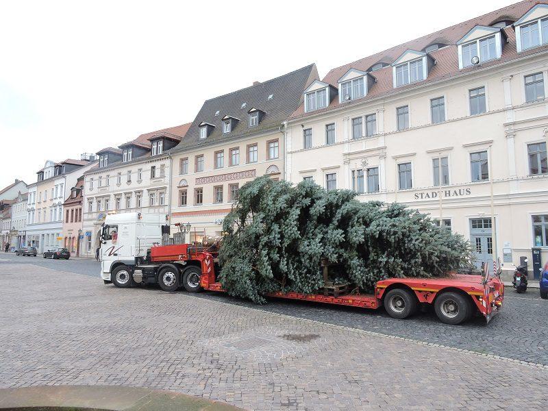 der grimmaer weihnachtsbaum ist da medienportal grimma. Black Bedroom Furniture Sets. Home Design Ideas