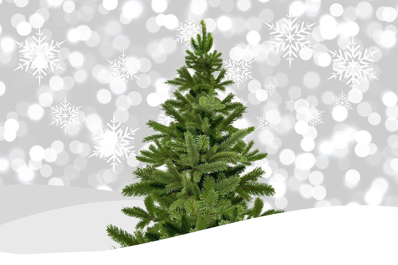 Weihnachtsbaum Ab Wann.Weihnachtsbaumverkauf Ab 07 12 In Trebsen Medienportal Grimma